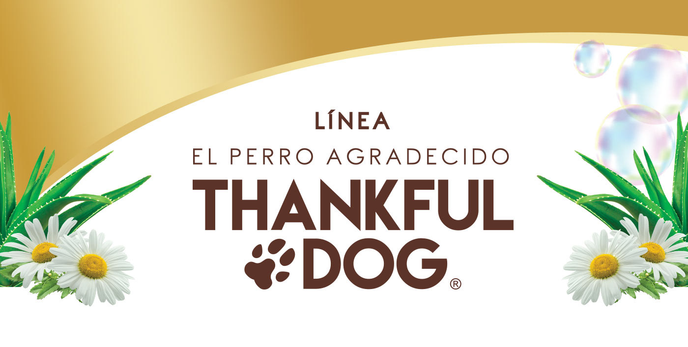 thankful-dog